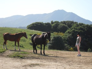 Horses with Mt. Tam in the background.