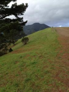 Walking on Mt Tam