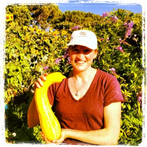 One of the large squashes from Heartshaven Community Garden